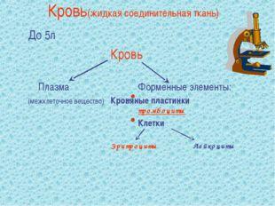 Кровь(жидкая соединительная ткань) До 5л Кровь  ПлазмаФорменные эле