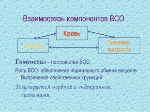Взаимосвязь компонентов ВСО Гомеостаз – постоянство ВСО Роль ВСО: обеспечение