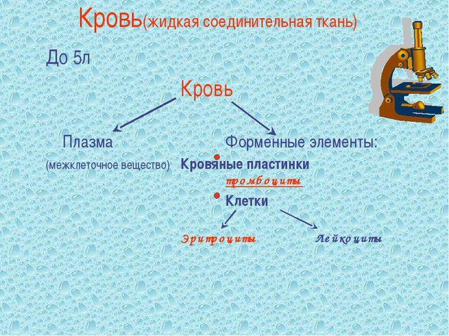 Кровь(жидкая соединительная ткань) До 5л Кровь  ПлазмаФорменные эле...