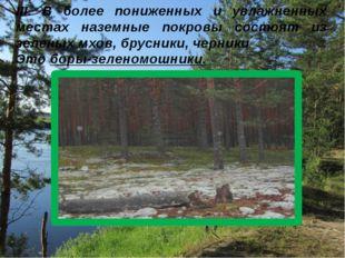 III. В более пониженных и увлажненных местах наземные покровы состоят из зеле