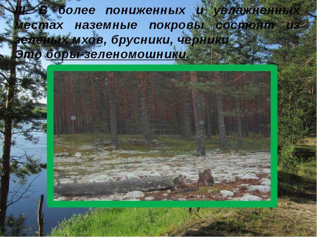 III. В более пониженных и увлажненных местах наземные покровы состоят из зеле...