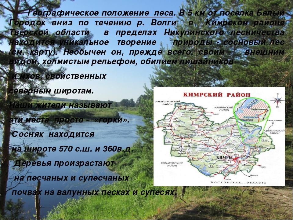 Географическое положение леса. В 5 км от поселка Белый Городок вниз по течен...