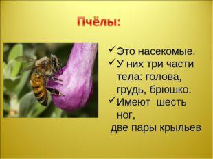 Это насекомые. У них три части тела: голова, грудь, брюшко. Имеют шесть ног,