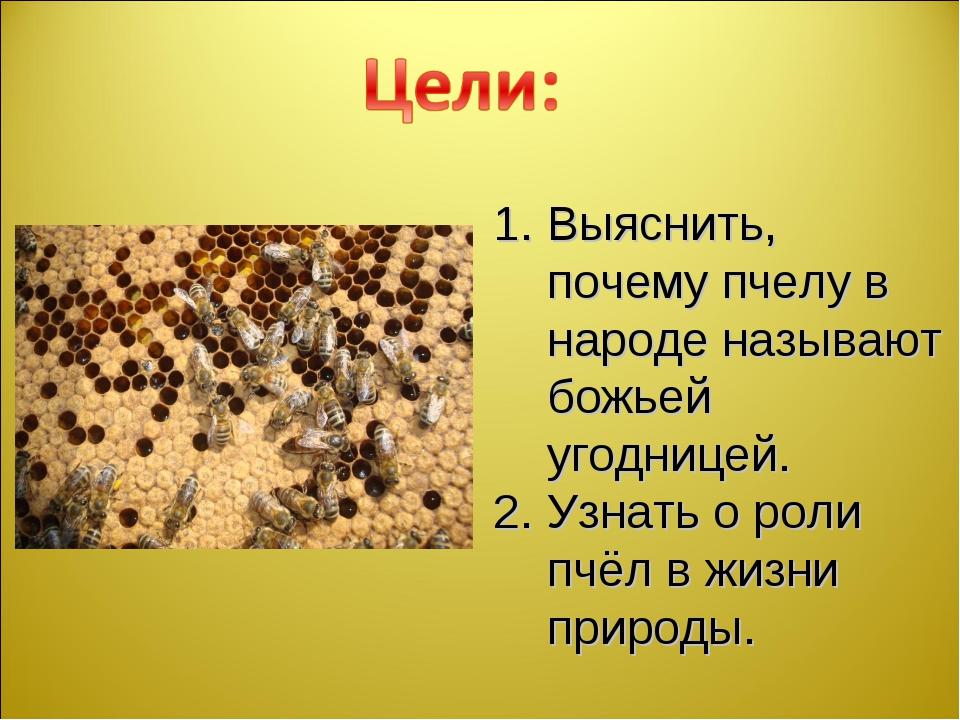 Выяснить, почему пчелу в народе называют божьей угодницей. Узнать о роли пчёл...