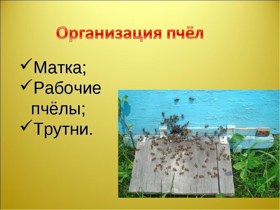 Матка; Рабочие пчёлы; Трутни.