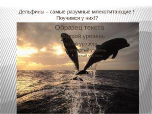 Дельфины – самые разумные млекопитающие ! Поучимся у них!?