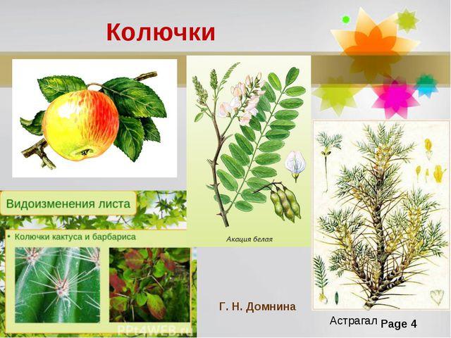 Колючки Астрагал Г. Н. Домнина Page *