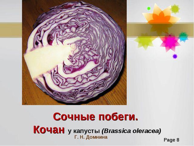 Сочные побеги. Кочан у капусты (Brassica oleracea) Г. Н. Домнина Page *