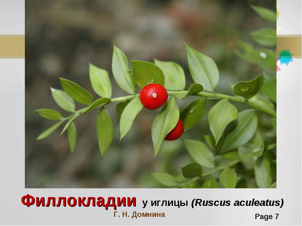 Филлокладии у иглицы (Ruscus aculeatus) Г. Н. Домнина Page *