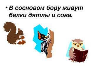 В сосновом бору живут белки дятлы и сова.