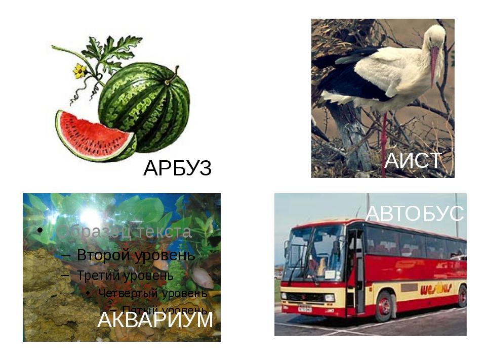 АИСТ АРБУЗ АКВАРИУМ АВТОБУС