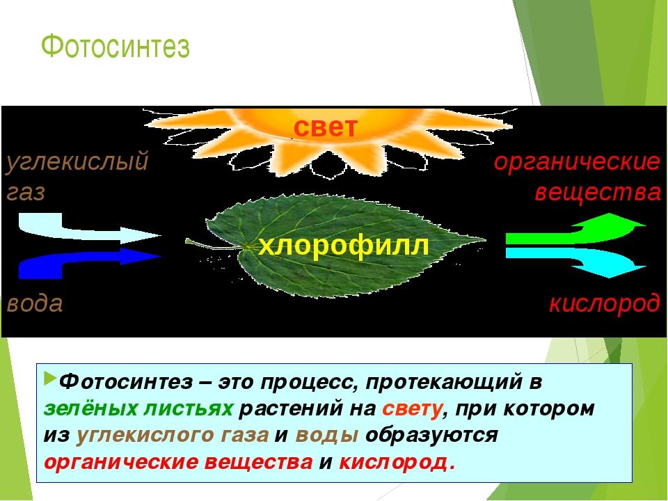 Фотосинтез это процесс происходящий в зелёных растениях