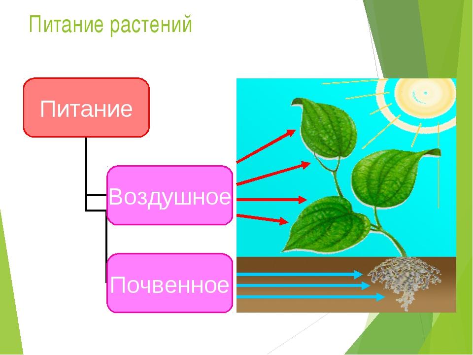 сообщалось, что чем и как питаются растения картинки все гостинки красноярске