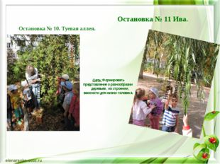 Цель: Формировать представление о разнообразии деревьев , их строении, важно