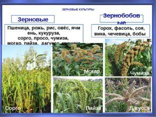 ЗЕРНОВЫЕ КУЛЬТУРЫ Зерновые Зернобобовые Пшеница,рожь,рис,овёс,ячмень,кук