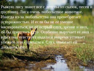 Рыжую лису знают все с детства из сказок, песен и пословиц. Лиса очень любопы