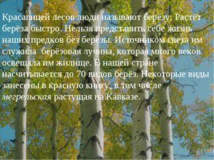 Красавицей лесов люди называют берёзу. Растёт берёза быстро. Нельзя представи
