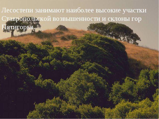 Лесостепи занимают наиболее высокие участки Ставропольской возвышенности и ск...
