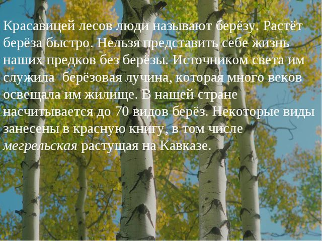 Красавицей лесов люди называют берёзу. Растёт берёза быстро. Нельзя представи...