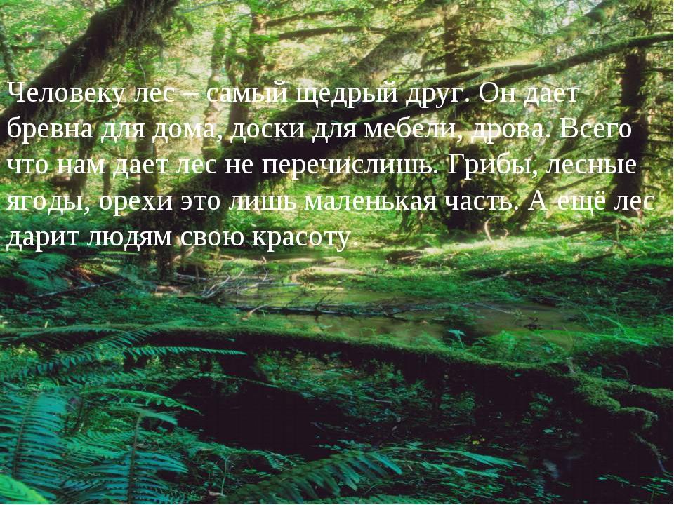 Человеку лес – самый щедрый друг. Он дает бревна для дома, доски для мебели,...