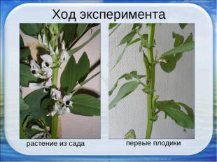 Ход эксперимента растение из сада первые плодики