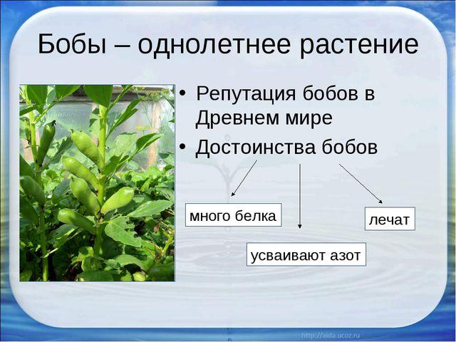 Бобы – однолетнее растение Репутация бобов в Древнем мире Достоинства бобов м...