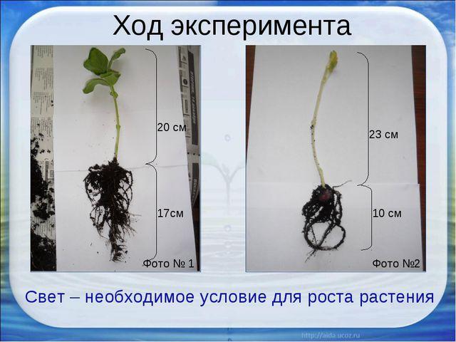 Ход эксперимента Фото № 1 Фото №2 Свет – необходимое условие для роста растен...