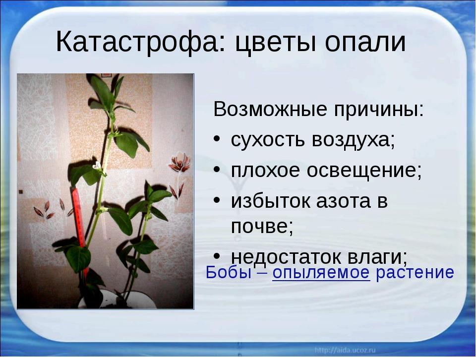 Катастрофа: цветы опали Возможные причины: сухость воздуха; плохое освещение;...
