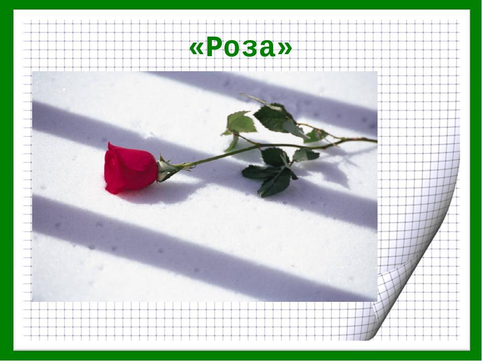 «Роза»
