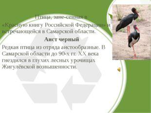 Птица, занесенная в «Красную книгу Российской Федерации» и встречающейся в