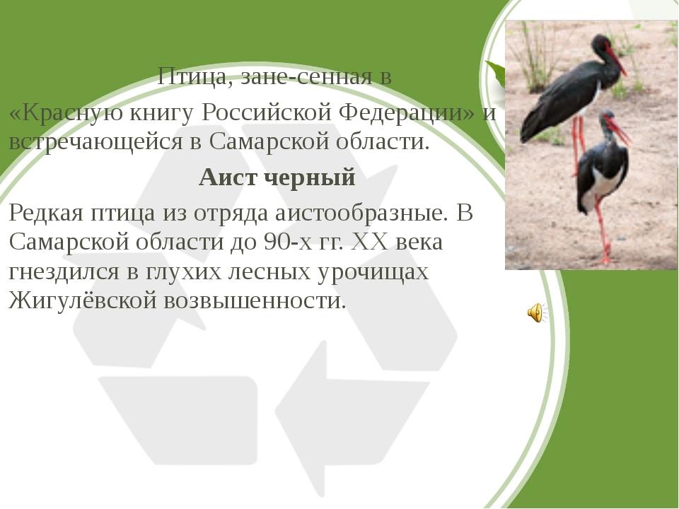 Птица, занесенная в «Красную книгу Российской Федерации» и встречающейся в...