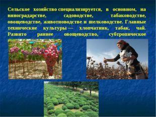 Сельское хозяйствоспециализируется, в основном, на виноградарстве, садоводст