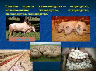 Главные отрасли животноводства— овцеводство, молочно-мясное скотоводство, пт