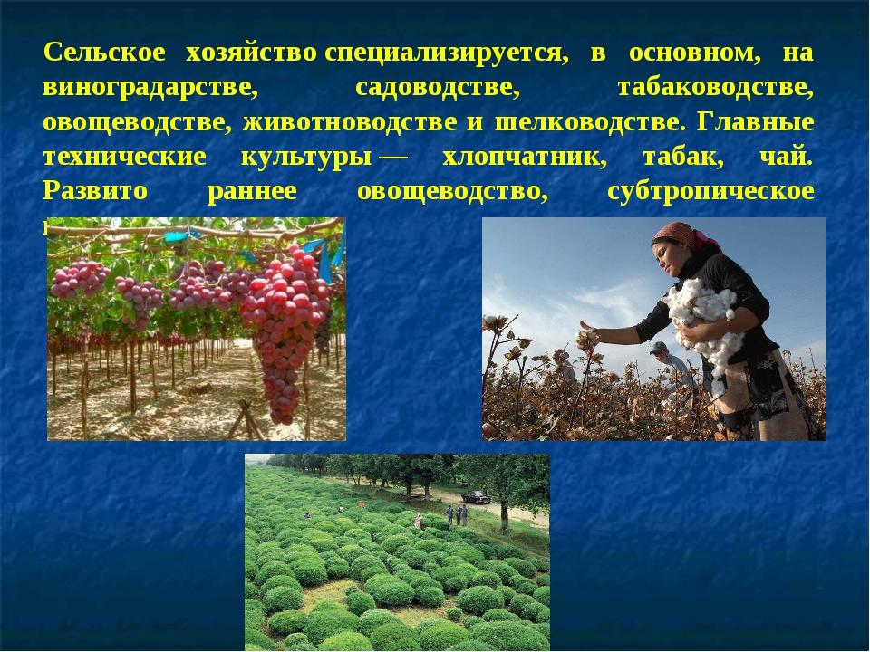 Сельское хозяйствоспециализируется, в основном, на виноградарстве, садоводст...