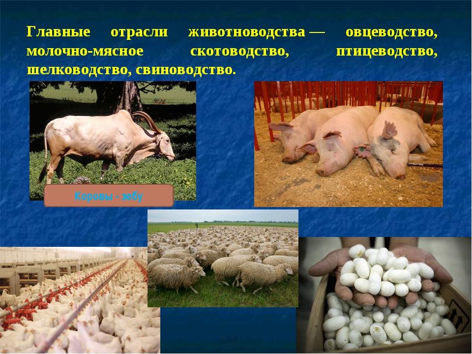 Главные отрасли животноводства— овцеводство, молочно-мясное скотоводство, пт...