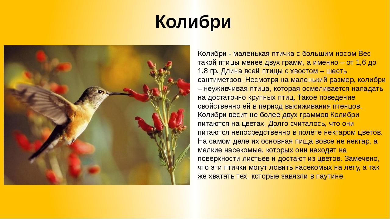 Колибри Колибри - маленькая птичка с большим носом Вес такой птицы менее двух...
