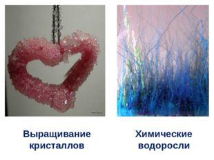 Выращивание кристаллов Химические водоросли
