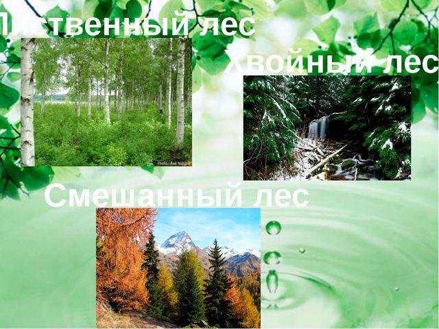 Лиственный лес Смешанный лес Хвойный лес
