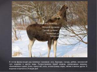 В состав фауны входит ряд типичных таежников: лось, бурундук, глухарь, рябчик