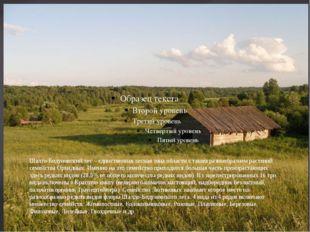 Шалго-Бодуновский лес – единственная лесная зона области с таким разнообразие
