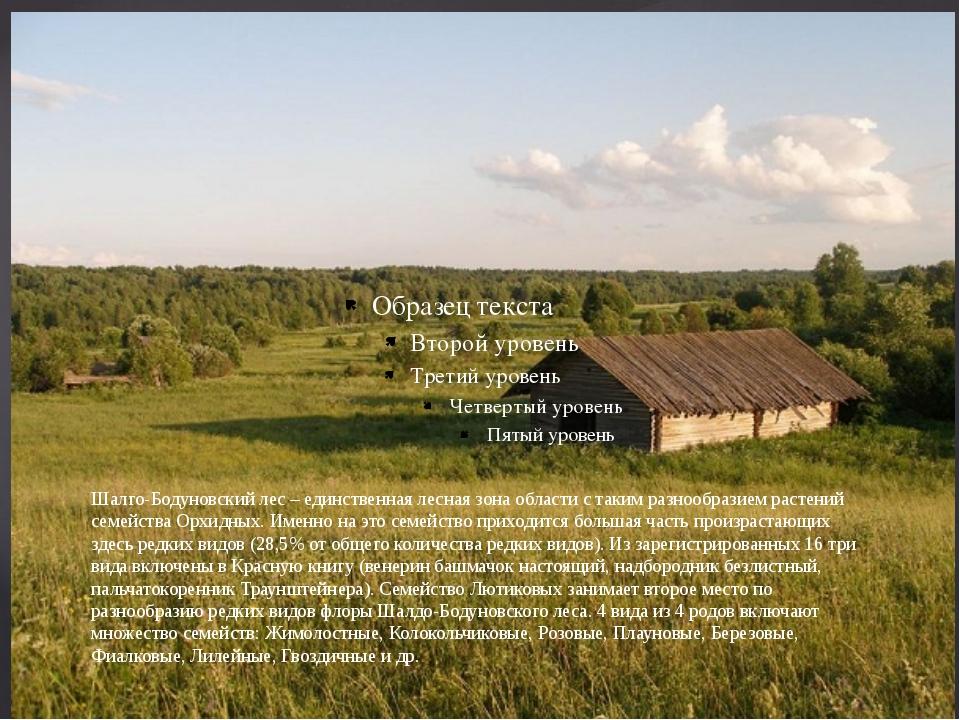 Шалго-Бодуновский лес – единственная лесная зона области с таким разнообразие...