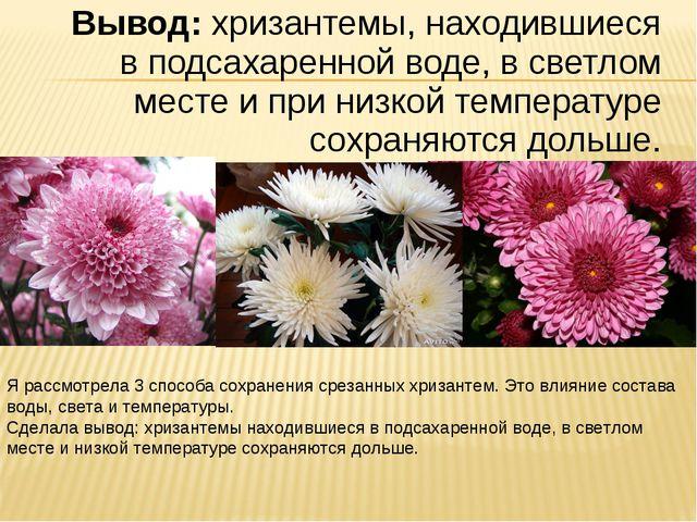Вывод: хризантемы, находившиеся в подсахаренной воде, в светлом месте и при н...