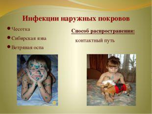 Инфекции наружных покровов Чесотка Сибирская язва Ветряная оспа Способ распро
