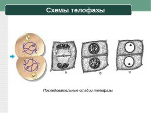 Схемы телофазы