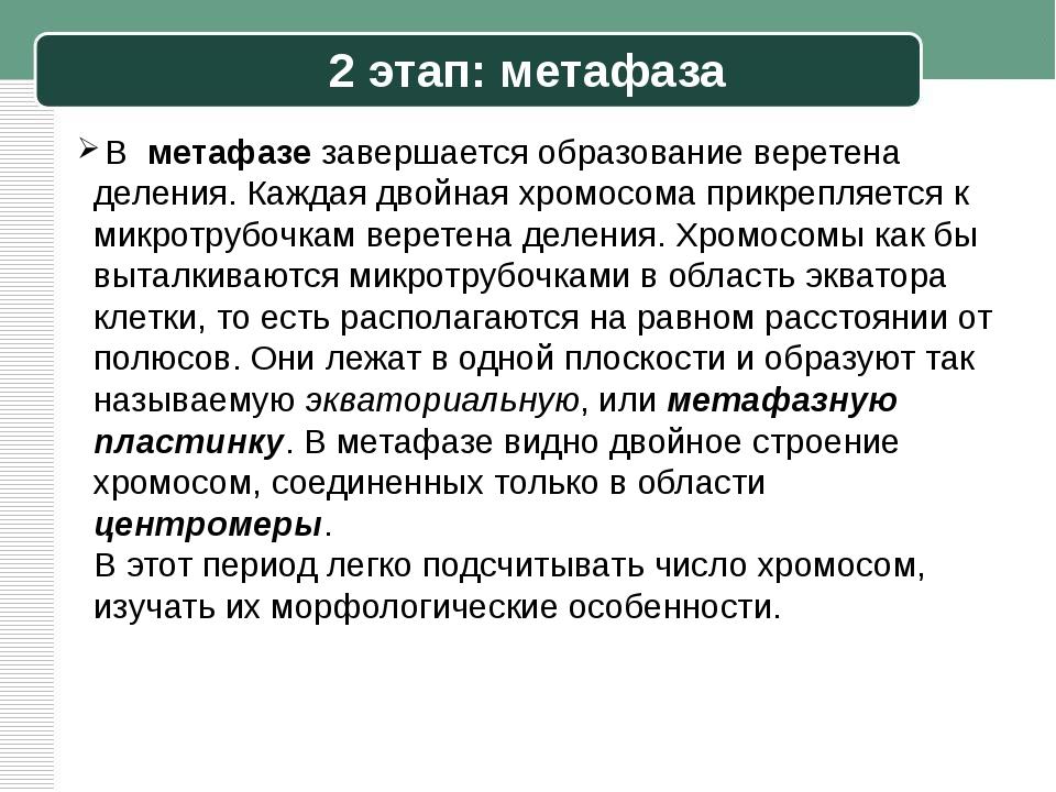 2 этап: метафаза В метафазе завершается образование веретена деления. Каждая...