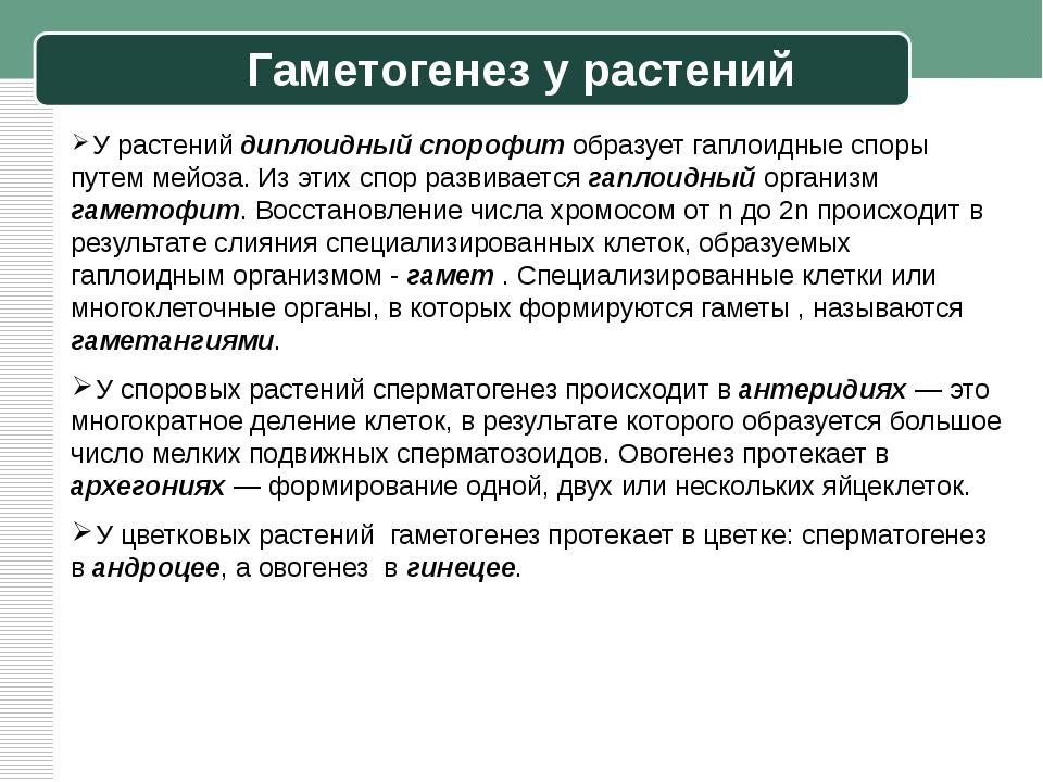 Гаметогенез у растений У растений диплоидный спорофит образует гаплоидные спо...