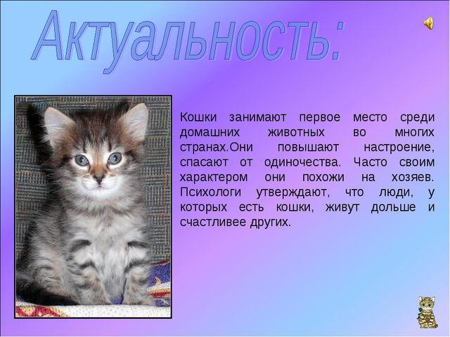 Кошки занимают первое место среди домашних животных во многих странах.Они пов...