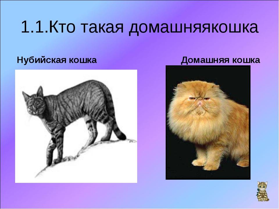 1.1.Кто такая домашняякошка Нубийская кошка Домашняя кошка