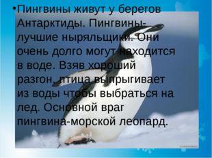 Пингвины живут у берегов Антарктиды. Пингвины-лучшие ныряльщики. Они очень до