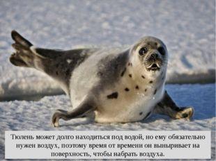 Тюлень может долго находиться под водой, но ему обязательно нужен воздух, поэ